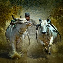 Race On Mud