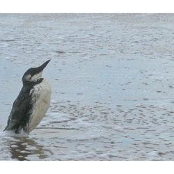zeekoet