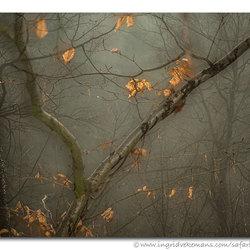 Woods Of Wonder