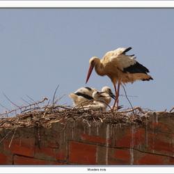 Moeders trots