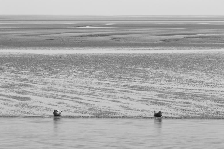 op de rand - prachtig om te zien hoe deze dieren bezig zijn , bij laag water zijn ze van heel dichtbij te bewonderen ,daarbij krijg je bij het weidse