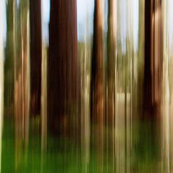 de bomen groeien tot in de hemel