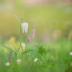 Sweet april flowers