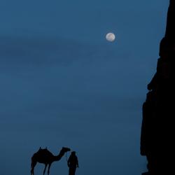 kameel bij volle maan