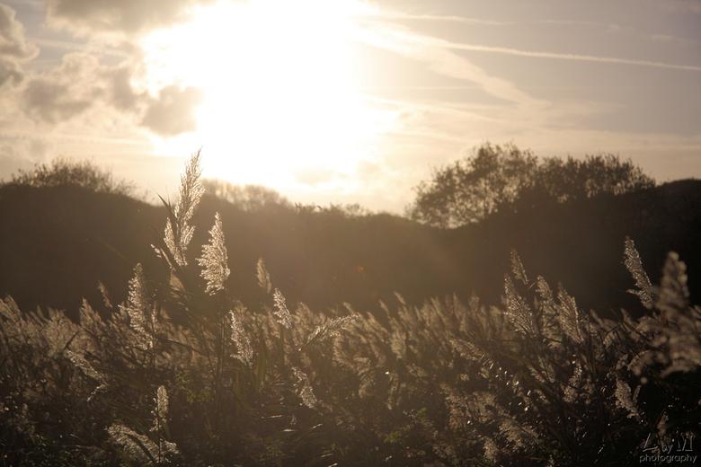 Tegenlicht - Glinstering in de zon.