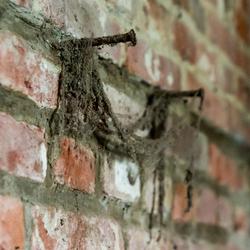 Web nails