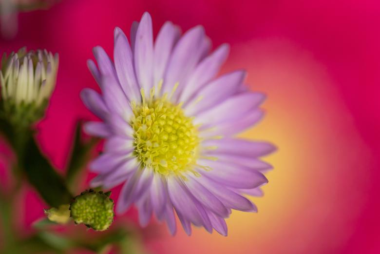 kleurig bloemetje - mijn vrouw nam een boeketje mee. Lentegevoel! Dus ook maar een foto van gemaakt.