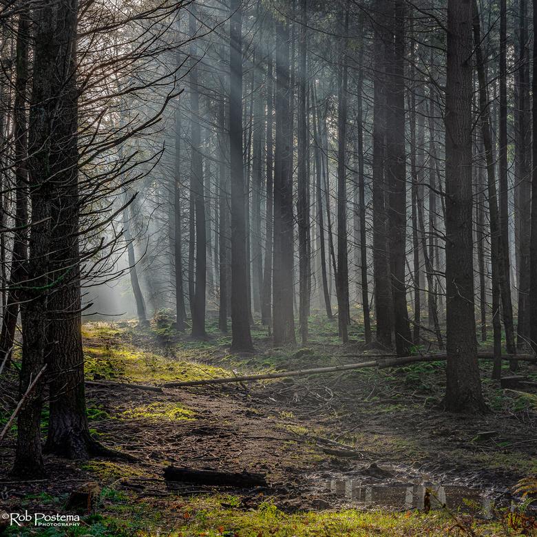 Herfst 2020 - Vroege ochtend in Speulderbos, herfst 2020