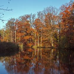 Herfst spiegelingen
