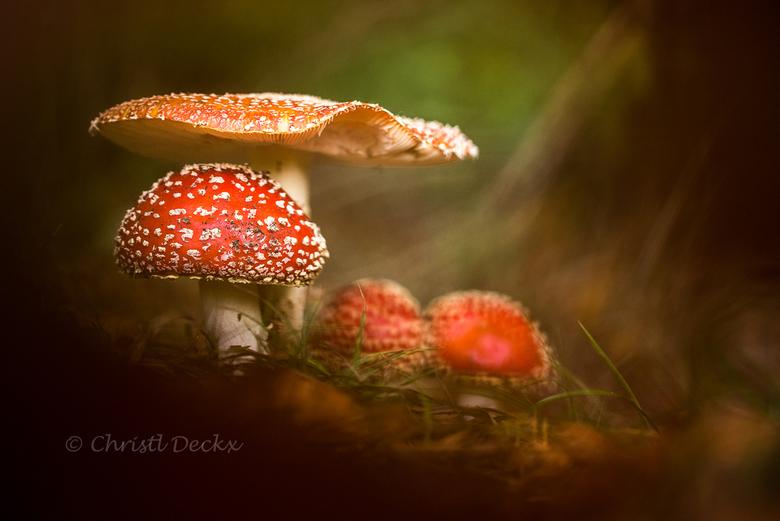 """Fairytale - Volop herfst in het bos...inspiratie voor een sprookje <img  src=""""/images/smileys/smile.png""""/>"""