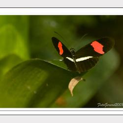 Vlinder in Artis 1