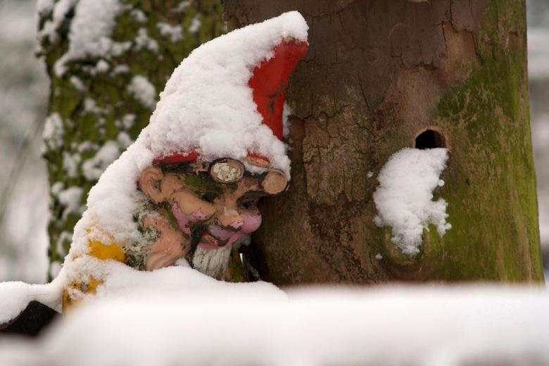 IJskoud - Al weer bijna 2 jaar geleden dat ik deze kleine kabouter gefotografeerd heb. Hij zat verscholen achter een grote boom en hij had het die dag