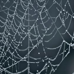 spinnenweb2