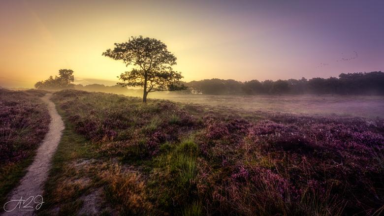 Purple - Mistige zonsopkomst op de Gasterse Duinen