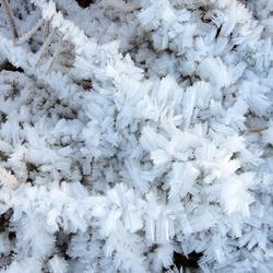 winter (13)