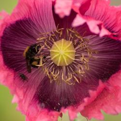 De bloemetjes en de... insecten?