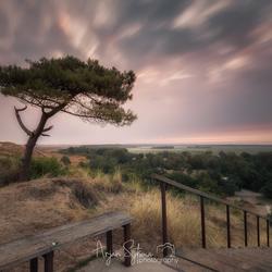 Eenzaam boompje op het Arjensduin