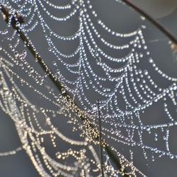 Spinneweb in ochtenddauw