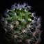 cactusje
