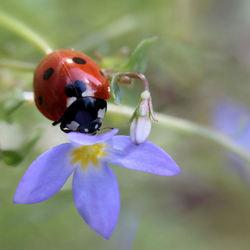 Een kapoentjes bloemetje