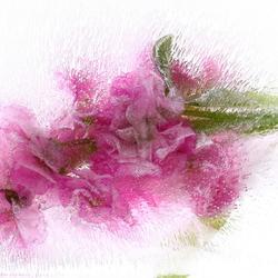 Vriesbloemen