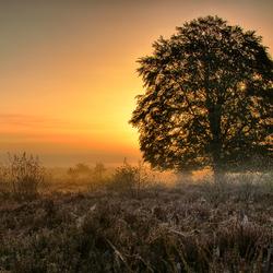 Boom bij zonsopgang