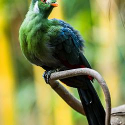 Heijderbos_Bird