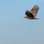 flyby zeearend