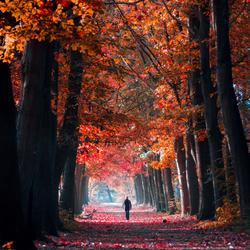 Kleurvolle boswandeling