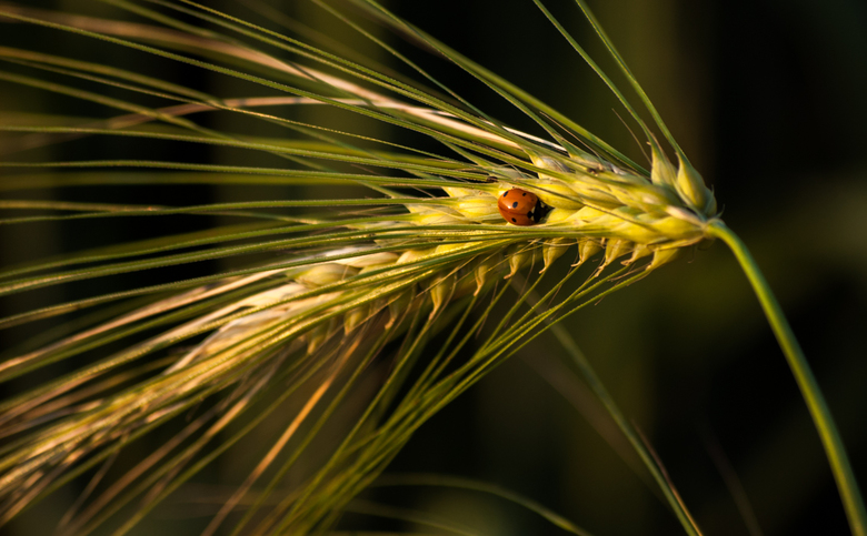Genieten van avondzonnetje. - Bedankt voor de vele leuke reacties en favoriet keuzes op het stoppelenveld, na de mais oogst.<br /> Groet en fijne zat