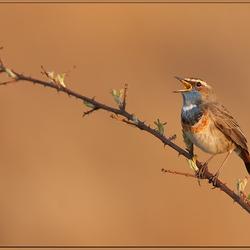 Ieder vogeltje zingt zoals ie gebekt is.