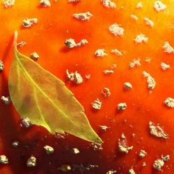 herfstblad op een vliegenzwam