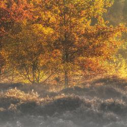 Herfst beleving....