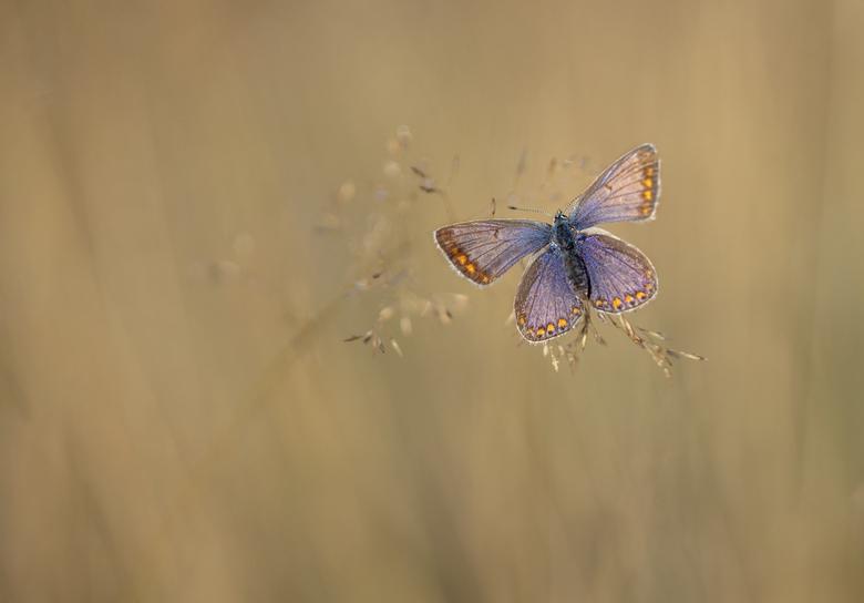 """Seizoens laatste... - Afgelopen maandag een laatste """"vlinder-trip"""" ondernomen van dit seizoen. Er vliegt nog van alles, maar zal nu snel min"""