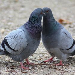 Twee duifjes !!!
