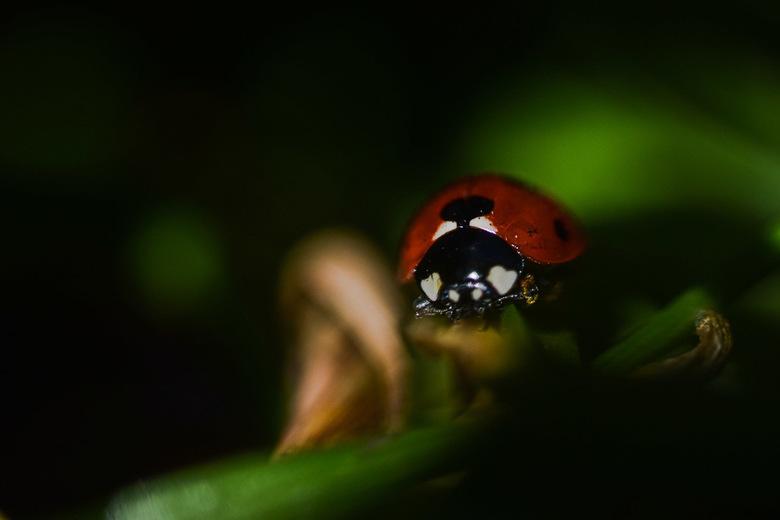 Ladybug  - Verstopt tussen groen ik heb je toch wel gezien