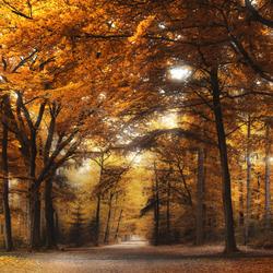 Under the yellow tree
