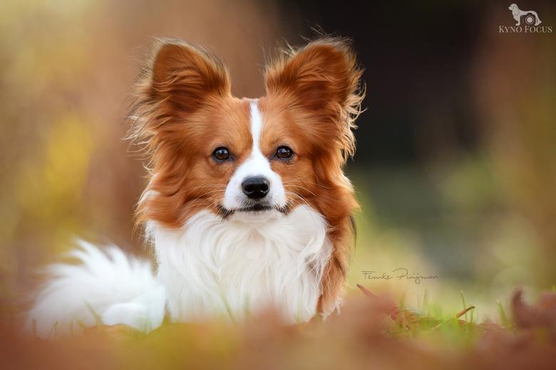 Hondje Sky in herfstkleuren