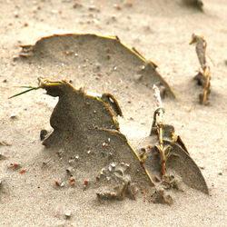 Zand en wind -2-