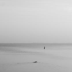 Zwemmer - Strijenham
