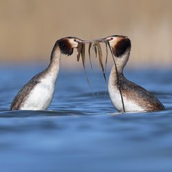 Start pinguïndansen Futen 2