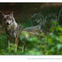 Meet the pack