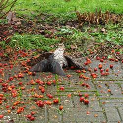 Natuurgeweld in onze eigen tuin