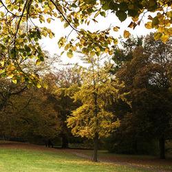 Bomen in herfsttooi