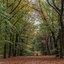Natuurgebied de Nieuwe Heide 2