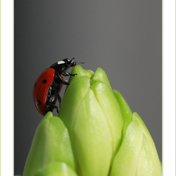 """That's one small step for a human, a giant leap for a ladybug"""