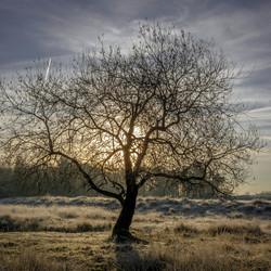 Surae,....Morning Sky.