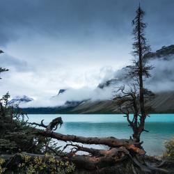 Magisch Bow Lake