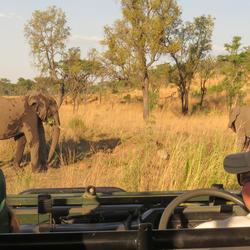 Blik vanuit de safari jeep...