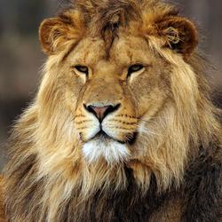Aankomende koning